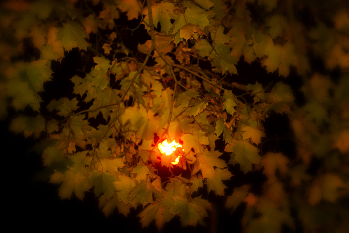 ослепительный свет осени - Любовь Потравных
