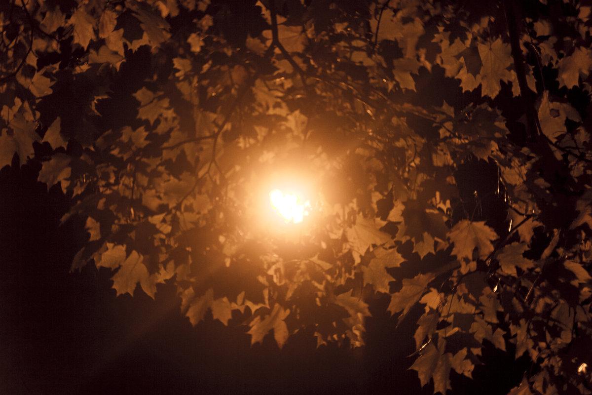яркая листва клена - Любовь Потравных