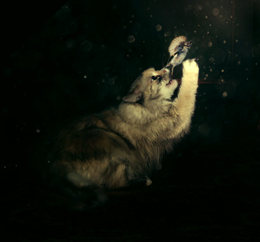 Охотничий инстинкт - Нина
