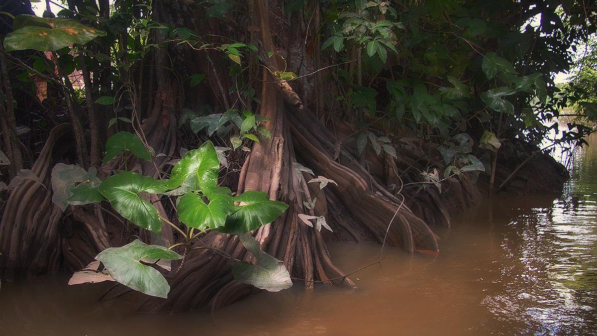 тропический лес - svabboy photo
