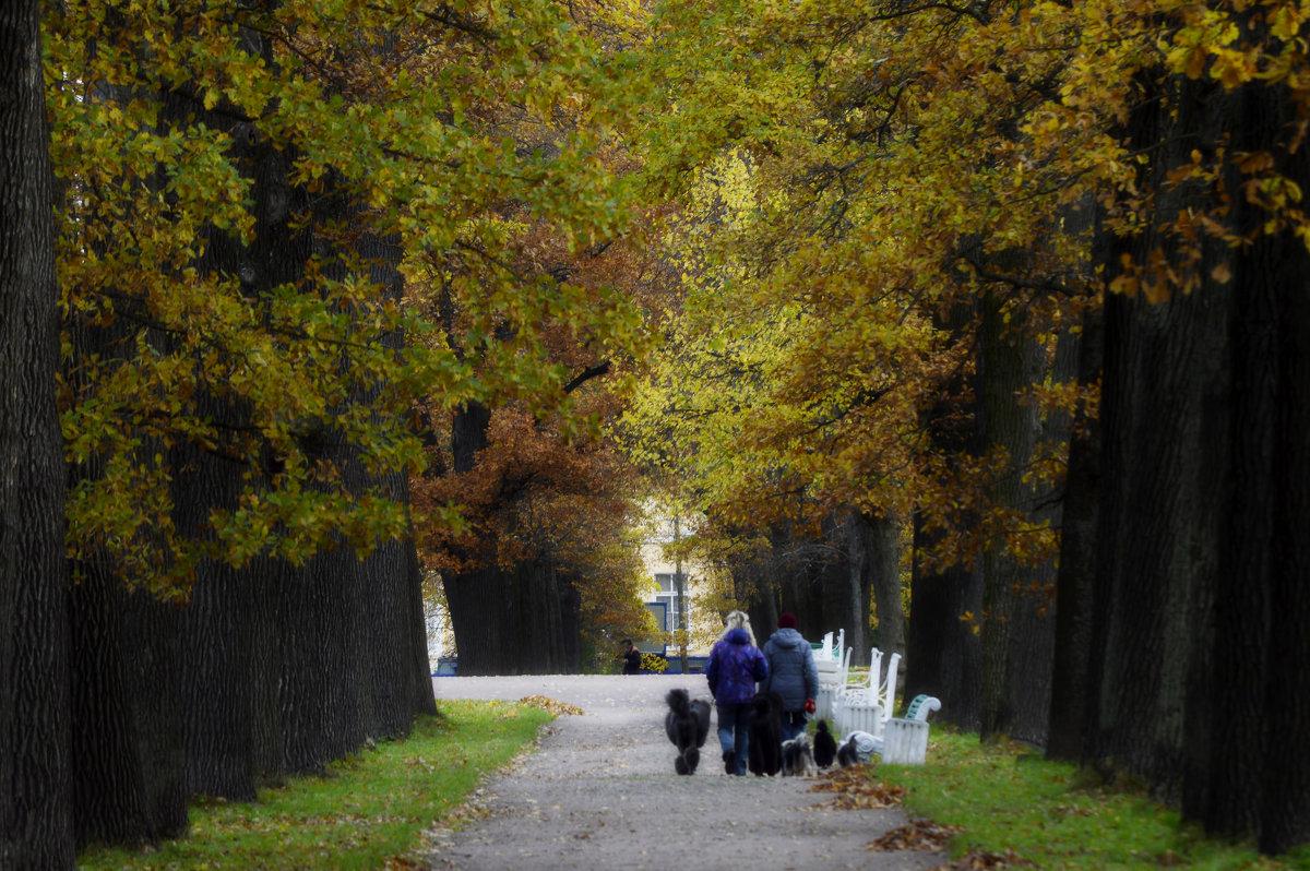 Осенний выгул..... - Юрий Цыплятников