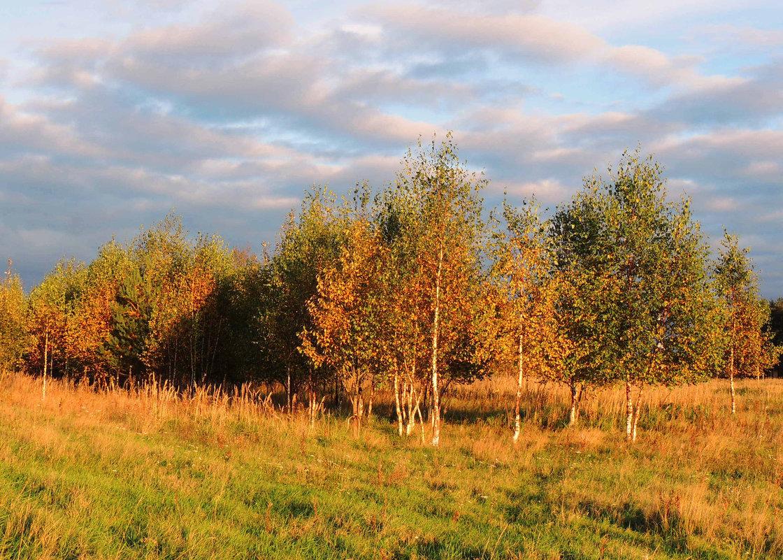 Осенний, березовый вальс - Павлова Татьяна Павлова