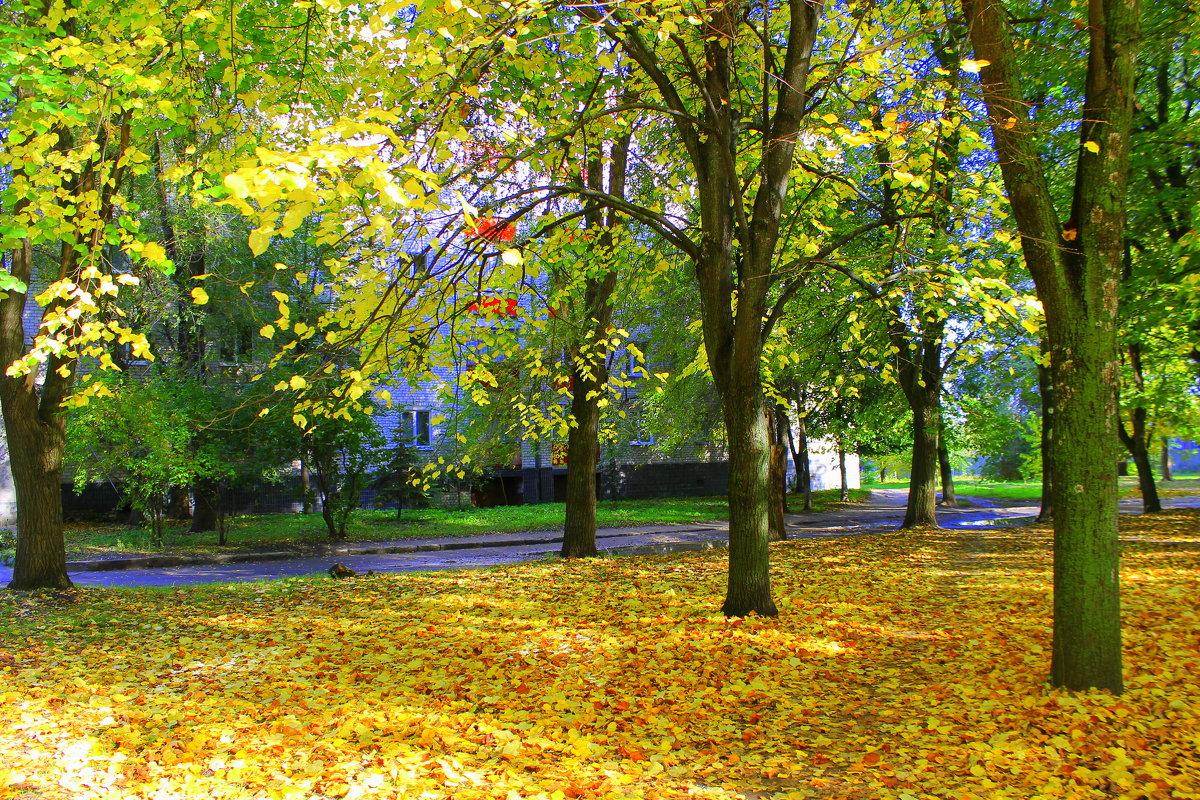 Листья золотые устилают парк. - Валентина ツ ღ✿ღ