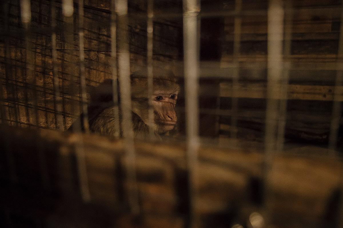 Грустная обезьянка - Сергей