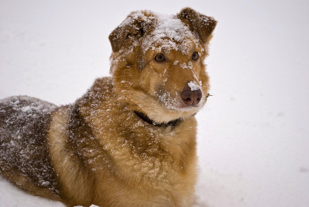 Сахара зимой - Александр Белоконь