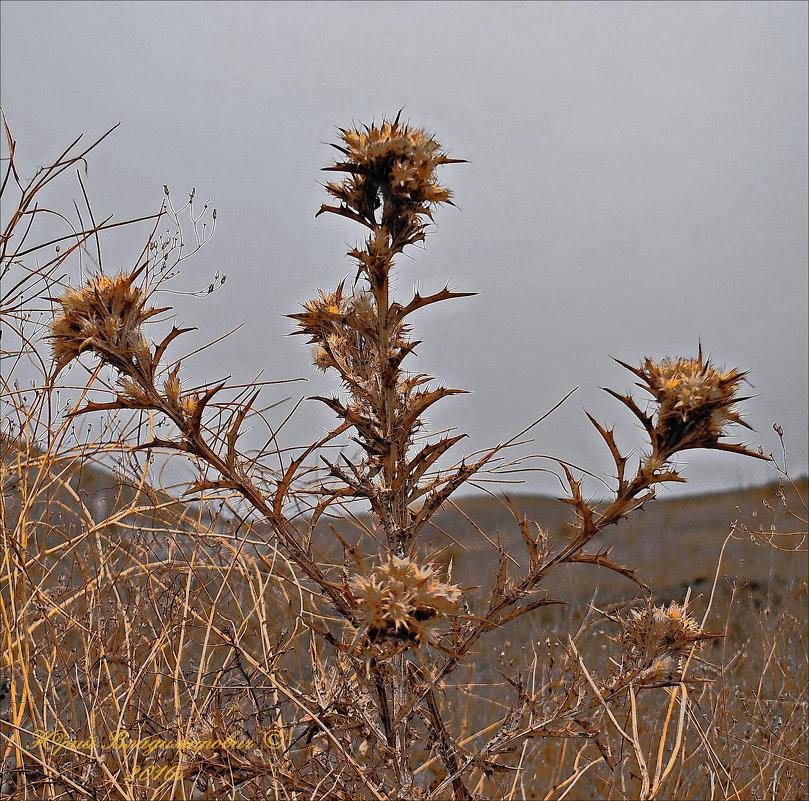осень в горах - Юрий Владимирович