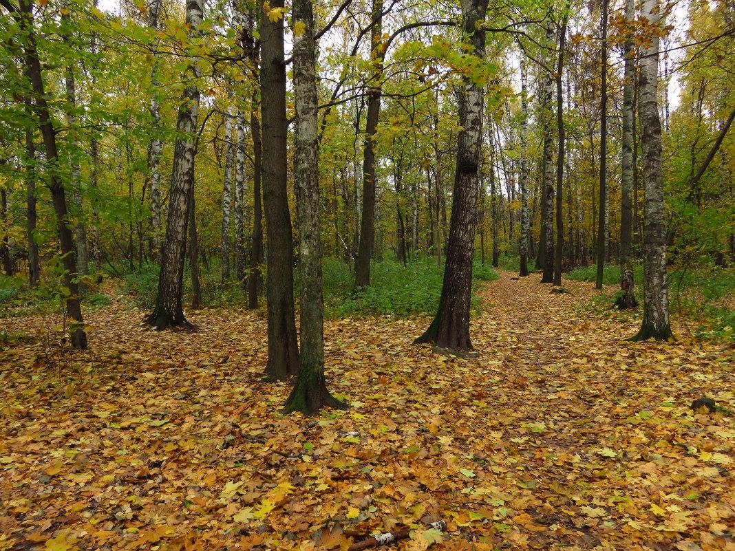 Октябрь обыкновенный (Мои полчасика перед работой) - Андрей Лукьянов