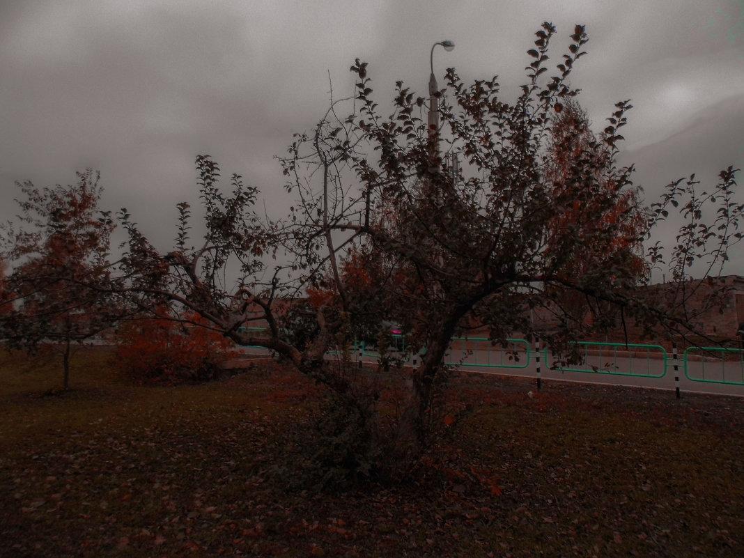 дерево - Юлия Денискина