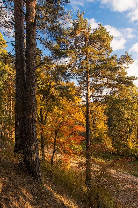 прогулка по осеннему лесу - Вадим Sidorov-Kassil