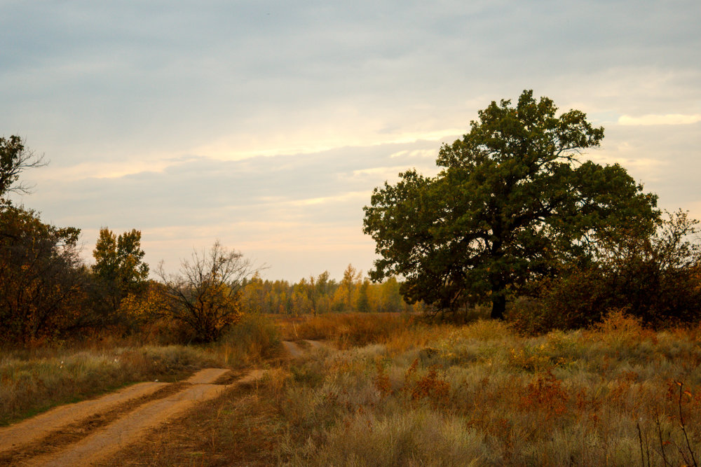 осенью после дождя - Надежда Щупленкова