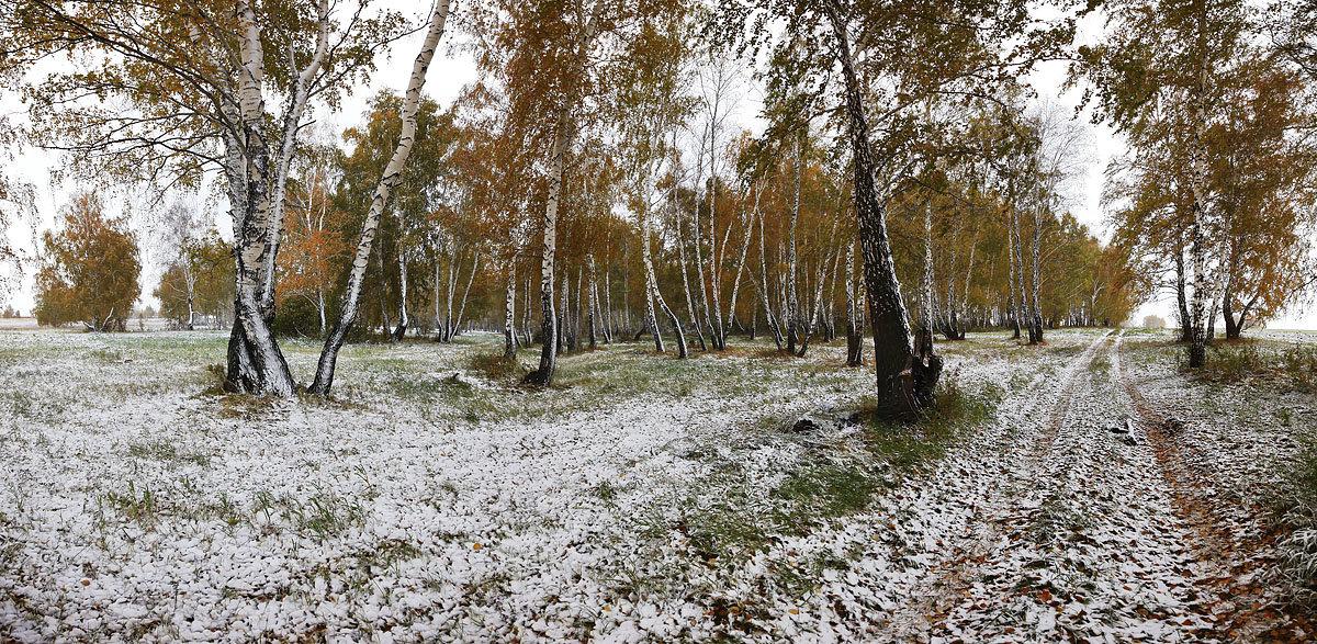Снежная проседь на жёлтой листве 3 - Сергей Жуков