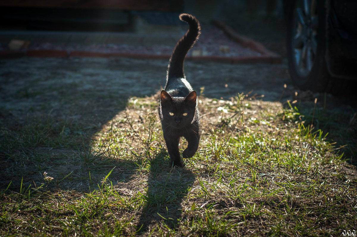 cat - Влад