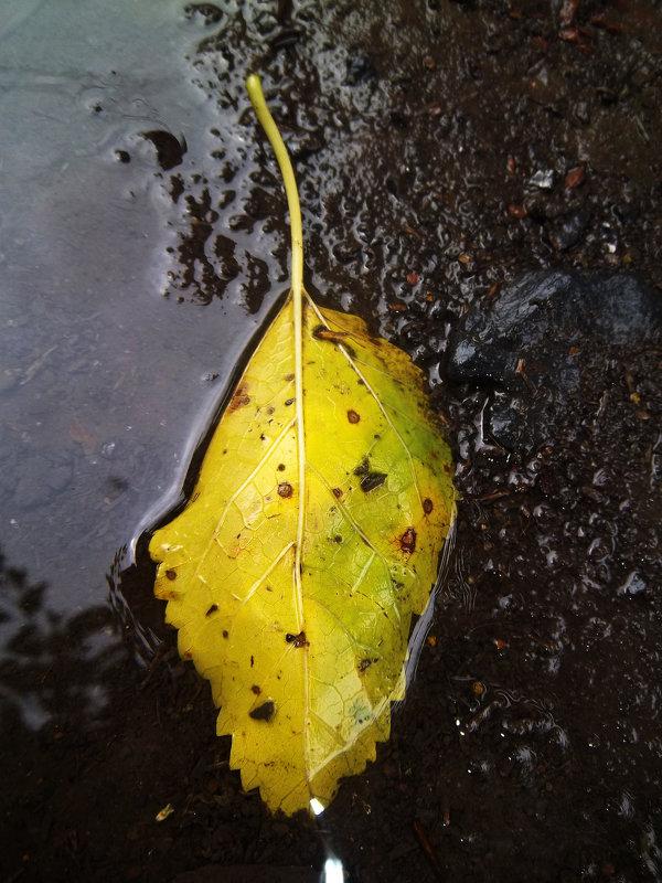 Осенний лист в лужи - Татьяна Королёва