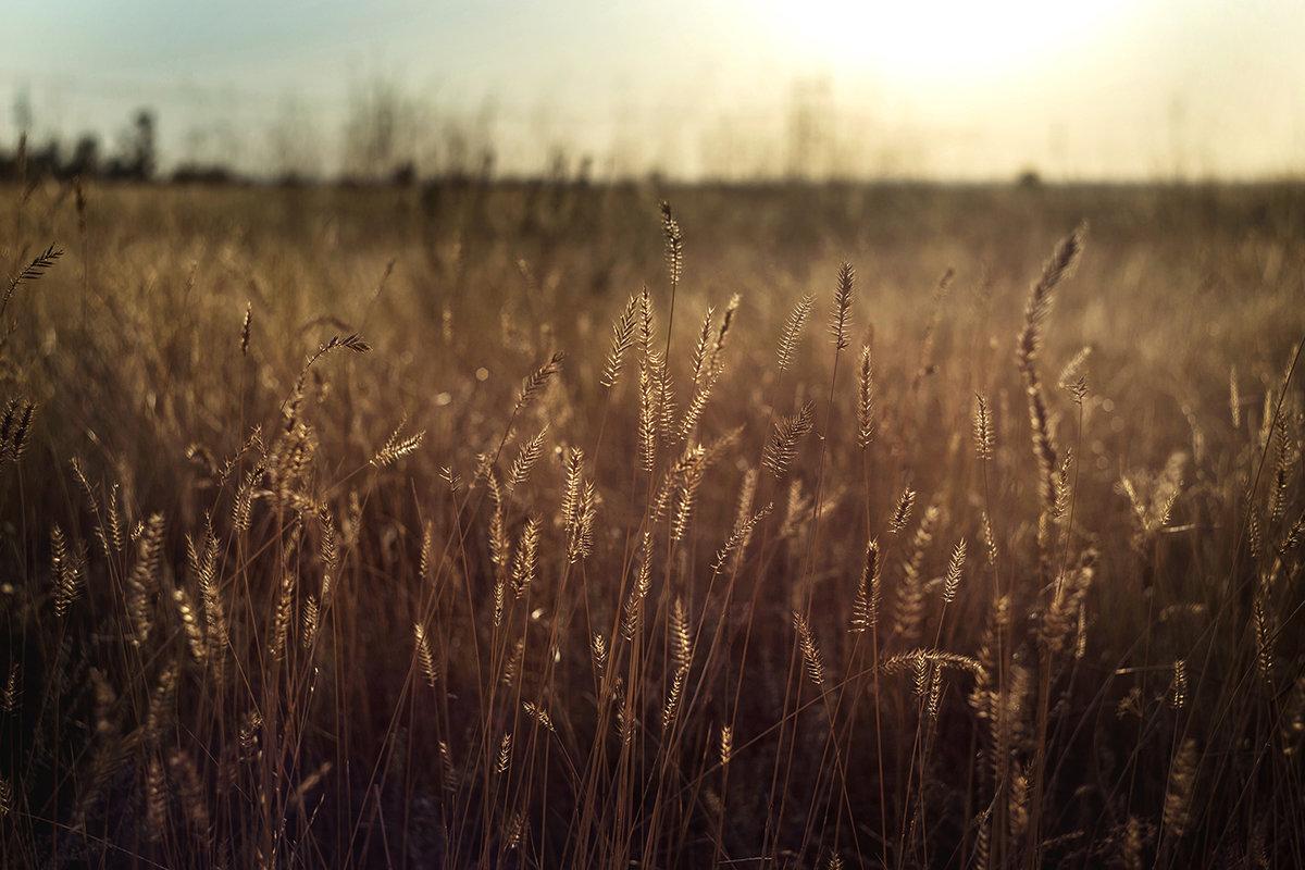Травы, травы - Татьяна Курамшина
