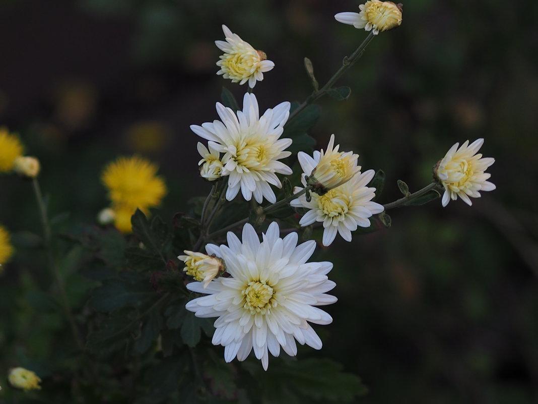 Чудесные осенние цветы - Игорь Касьяненко