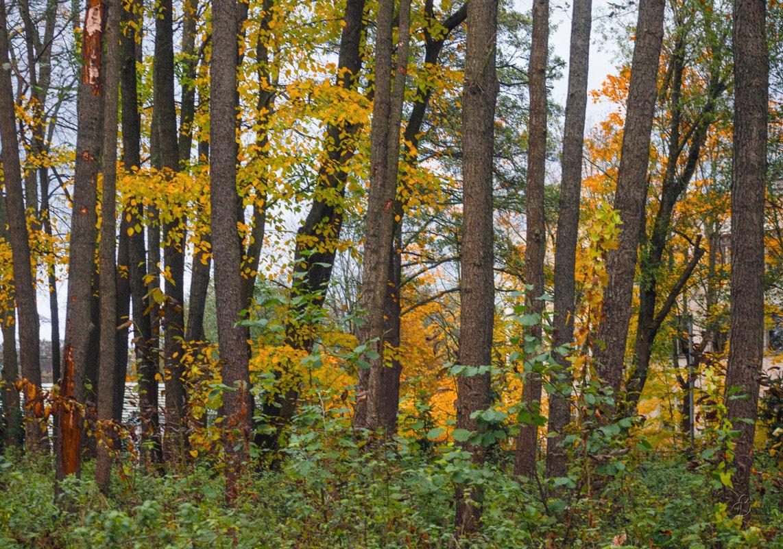 Осенняя зарисовка - Виталий