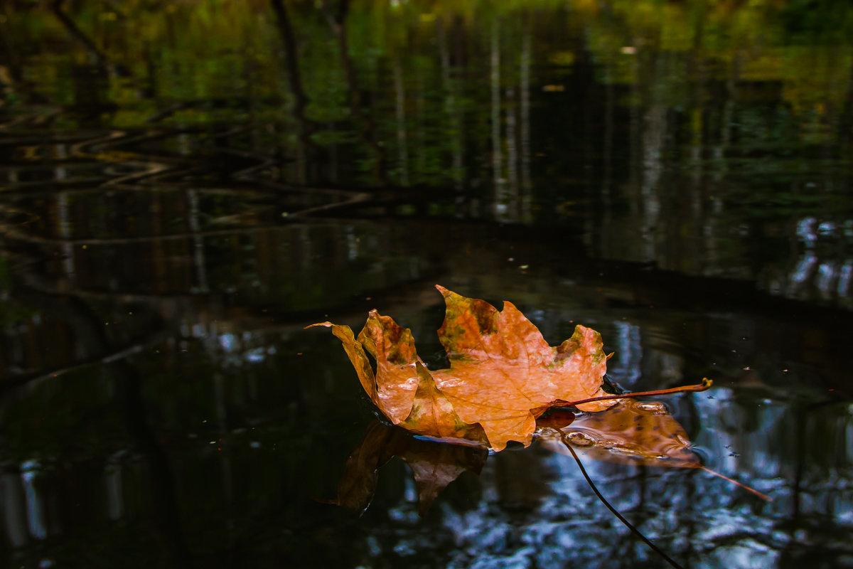 С ветки падающий лист - Дмитрий
