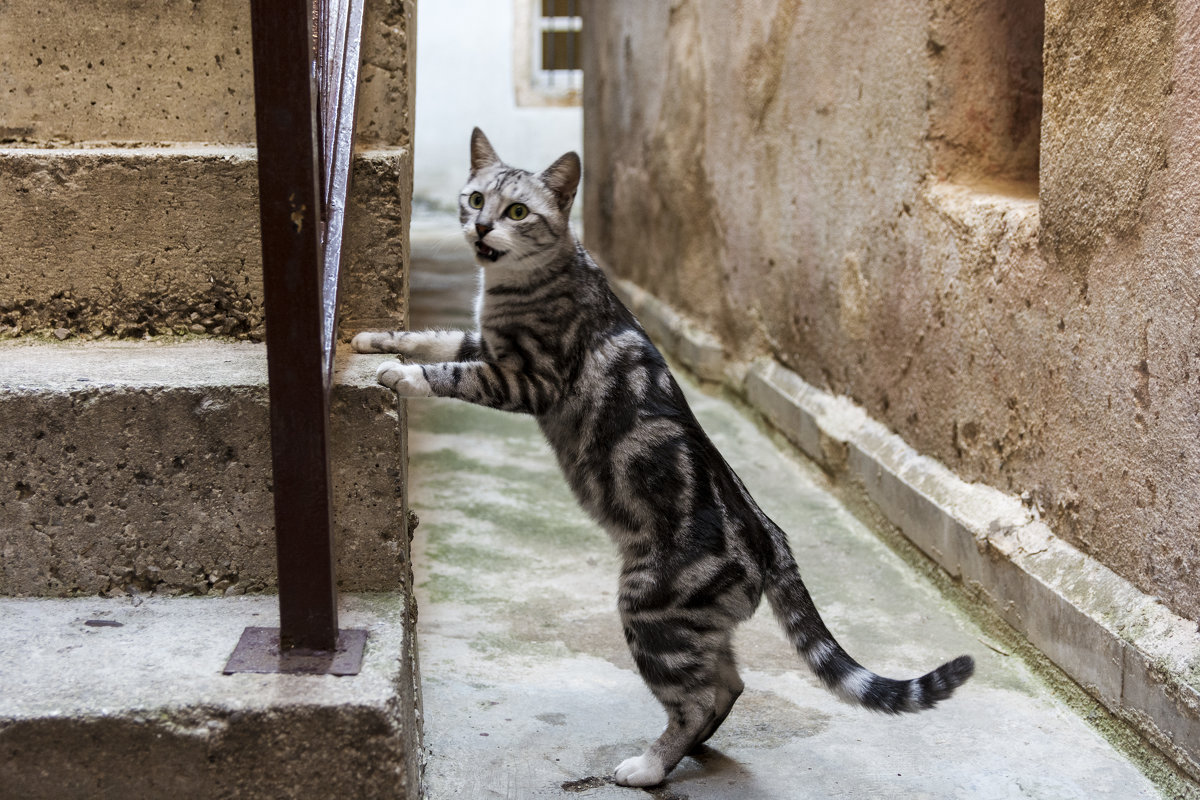 cat - Vitalij P