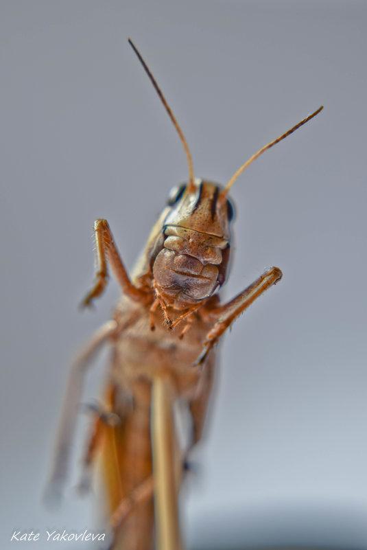 макро насекомка - Екатерина Яковлева