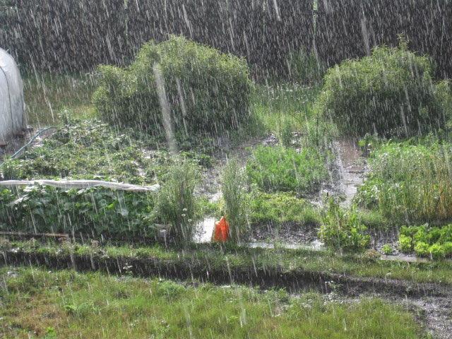 Летний дождь - Tatyana Kuchina