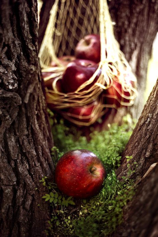 Яблоко от яблони - Екатерина Кононенко