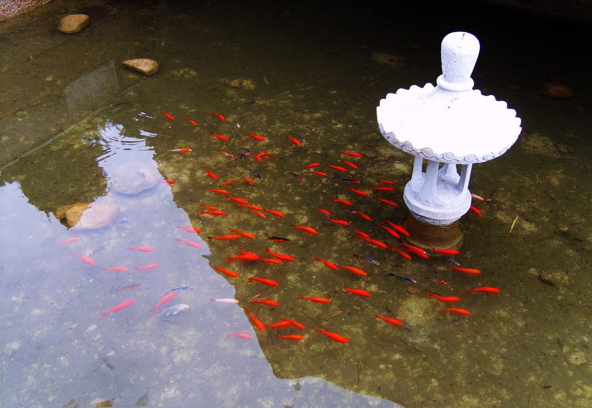 Золотые рыбки - Ирина Арефьева