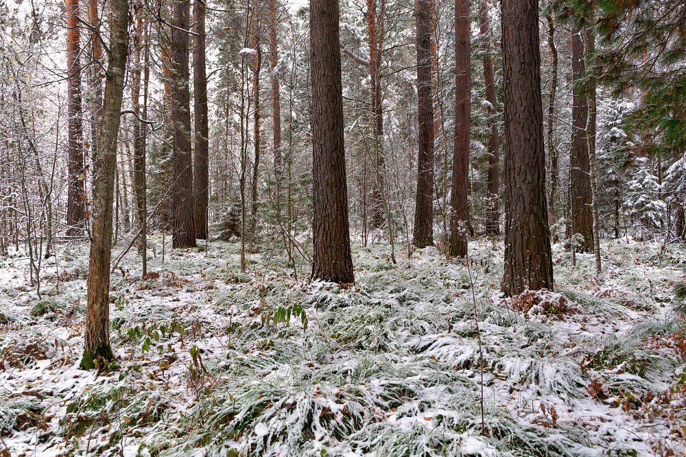 Таинственный лес - Юрий Михайлов