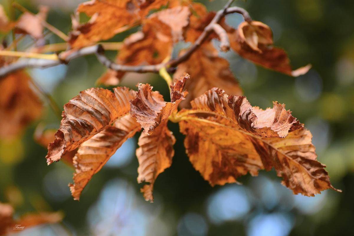 Осенняя охра. - Paparazzi