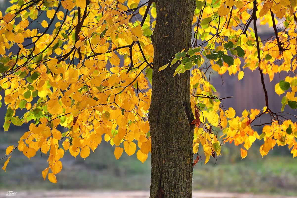 Осень,осень..... - Paparazzi