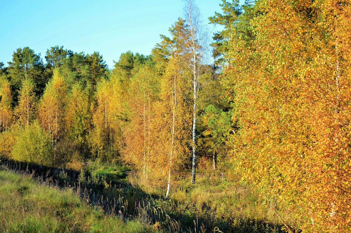 Осенний лес. - Новиков Игорь