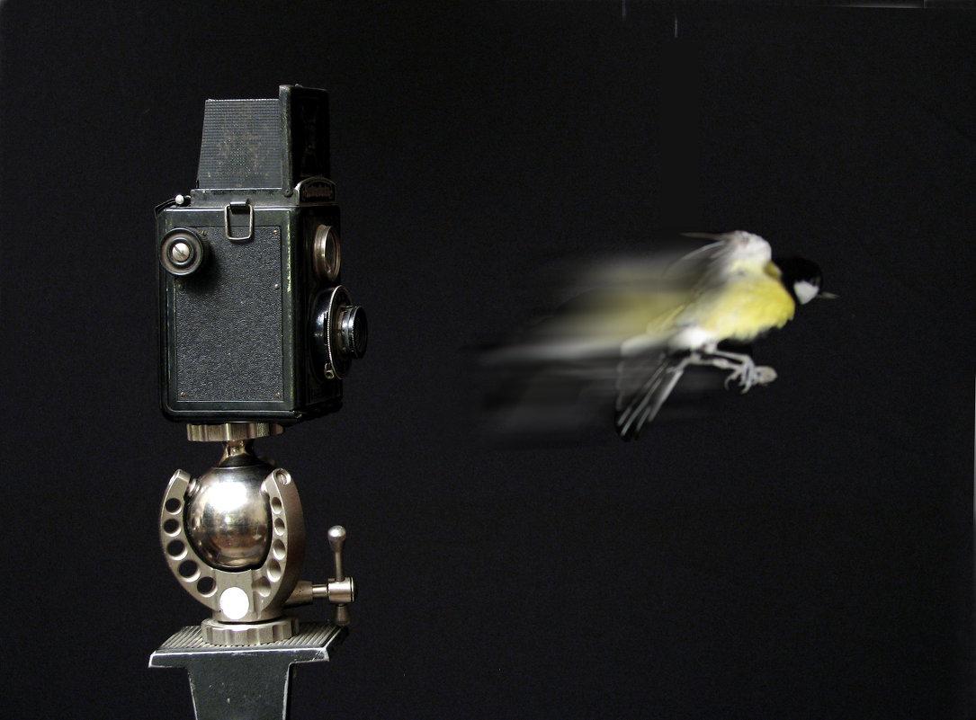 """"""" Фотограф щелкает....и птичка вылетает !"""" сбылась мечта идиота, с детства так и представл - Gavrila68 -Женя"""
