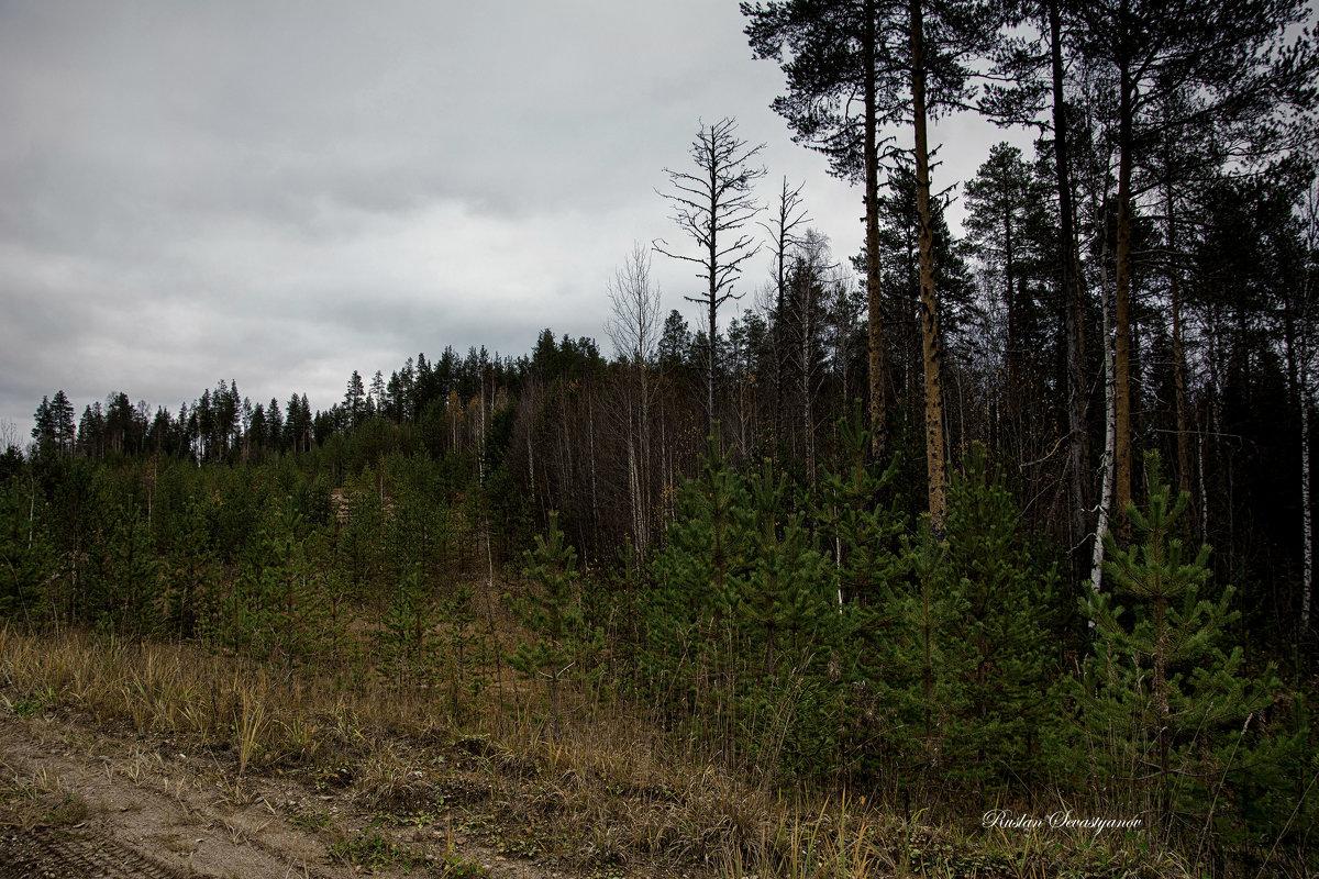 Природа осень... - סּﮗRuslan HAIBIKE Sevastyanovסּﮗסּ