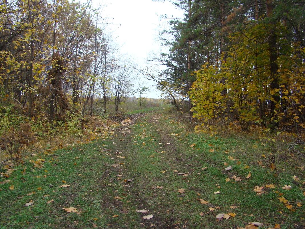 Лес в октябре - марина ковшова