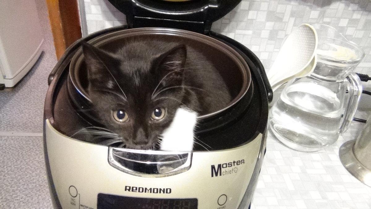 Есть суп из топора, а у меня из кота - Ирина Арефьева