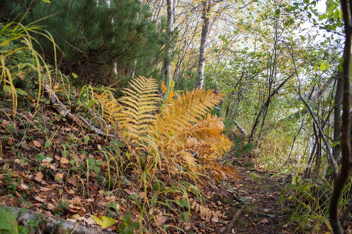 Лесные прогулки - Наталья Литвинчук