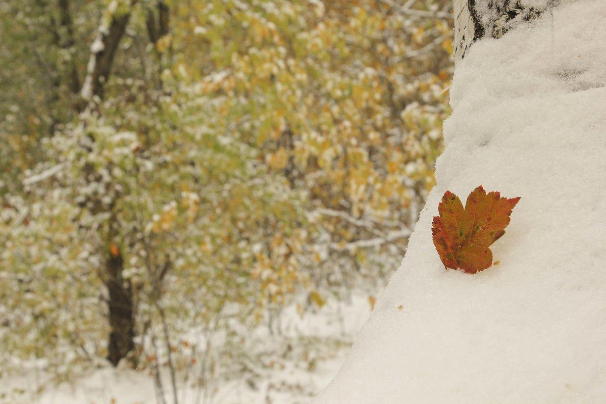 Первый снег - ARS