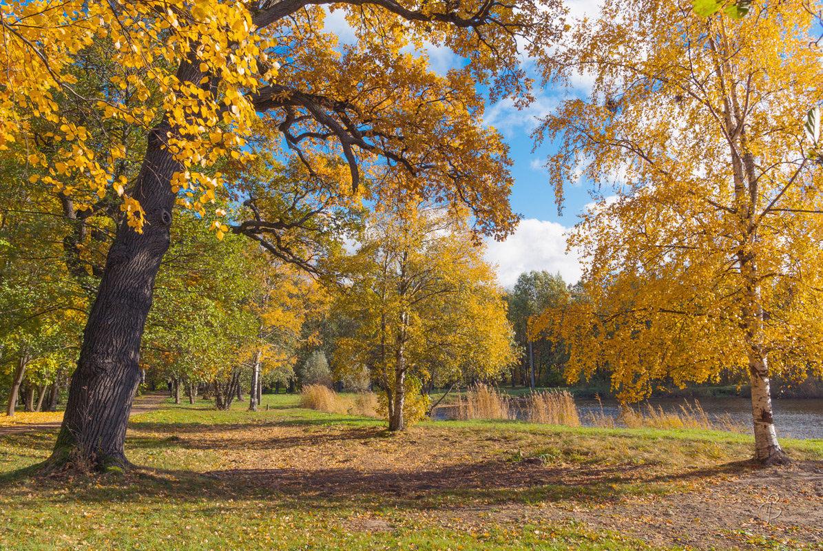 Чудный день осени - Виталий