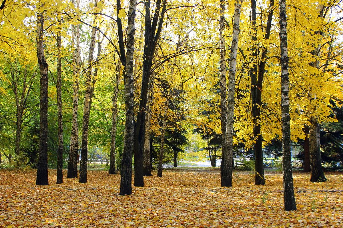 Осень золотая в гости к нам пришла. - Валентина ツ ღ✿ღ