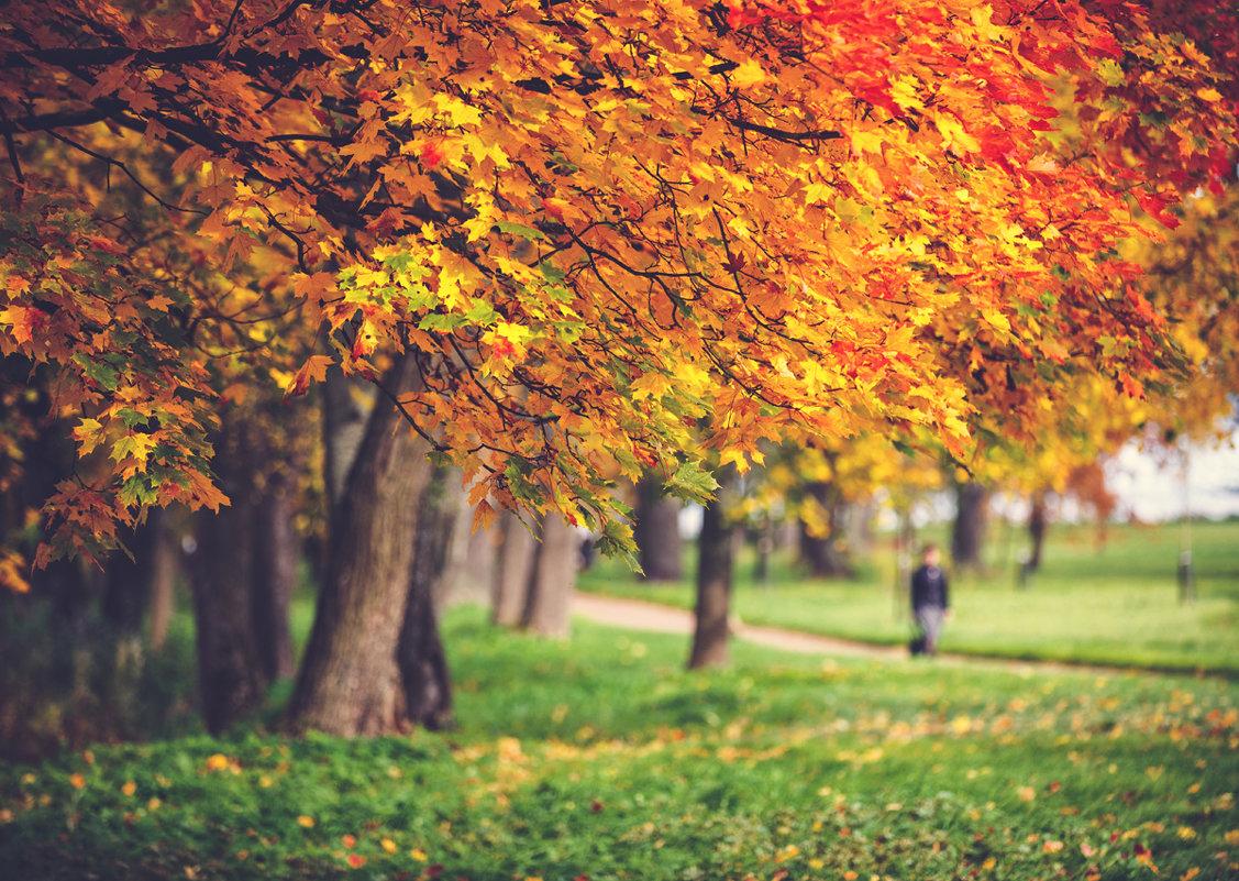 Осень в парке Александрия. - Юрий