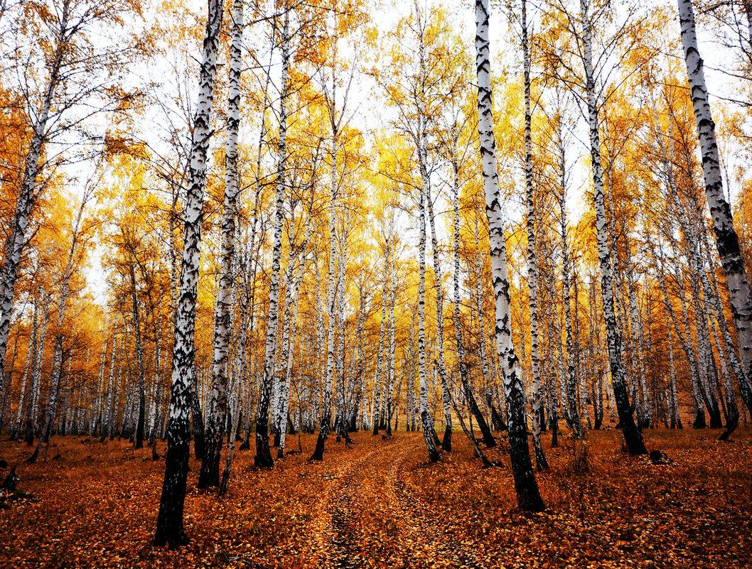 Дорожка в осень - Татьяна Губина