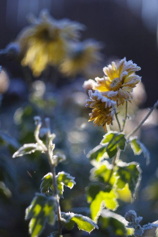 цветок - сергей швед