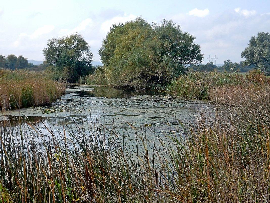 Заросший пруд - Владимир
