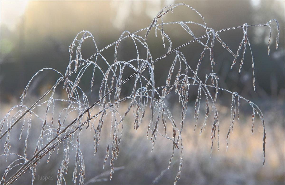 Застывшая мелодия - Юрий Спасенников