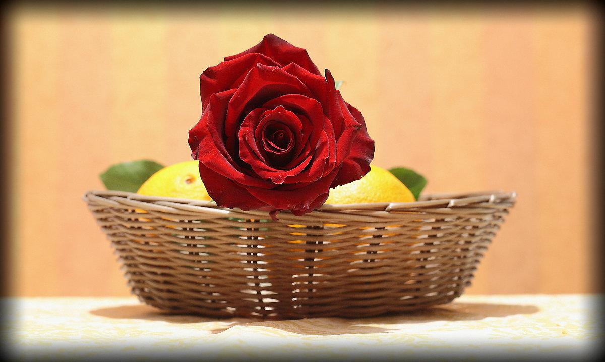 роза - galiyalex .