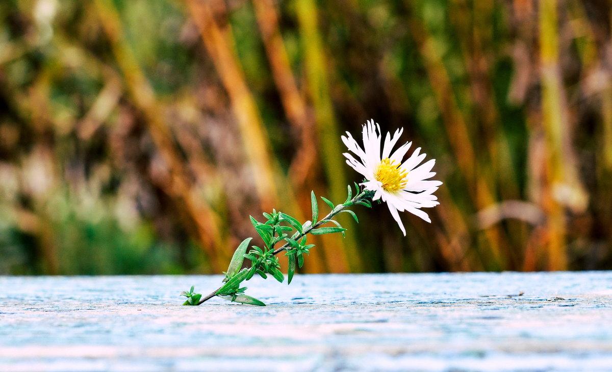 Цветок - Марина Романова