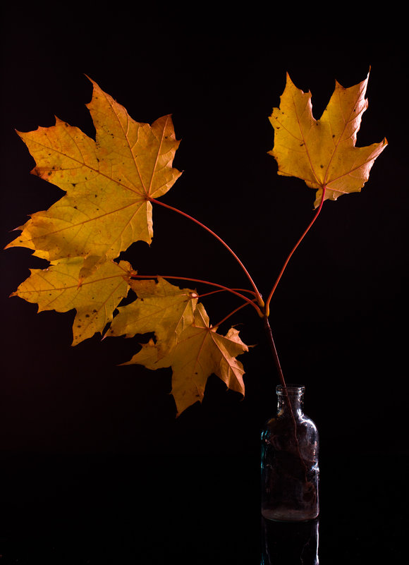 Вот и осень... - Sergey Apinis