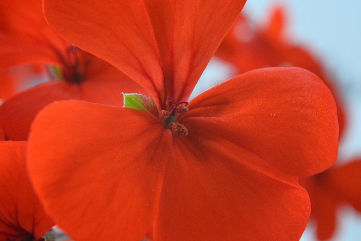 Домашний цветок. - Aлександр **