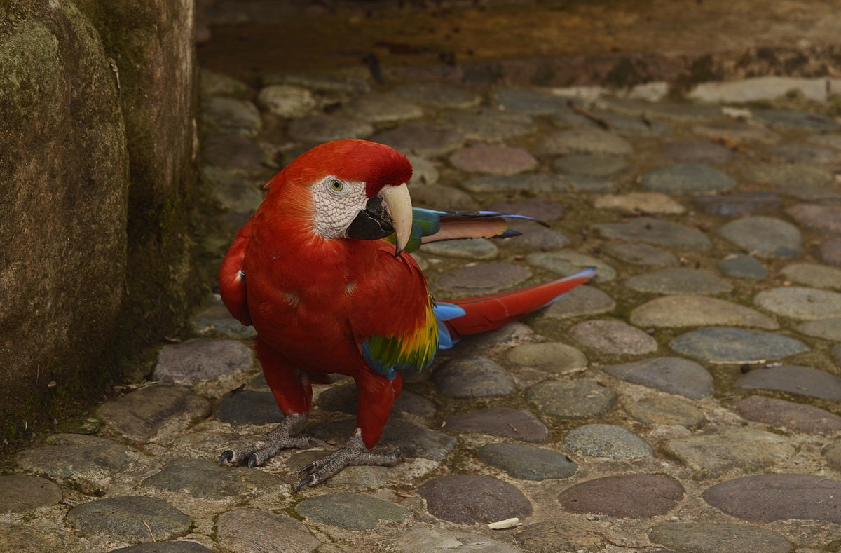 Питомцы Перу - Svetlana Plasentsiia