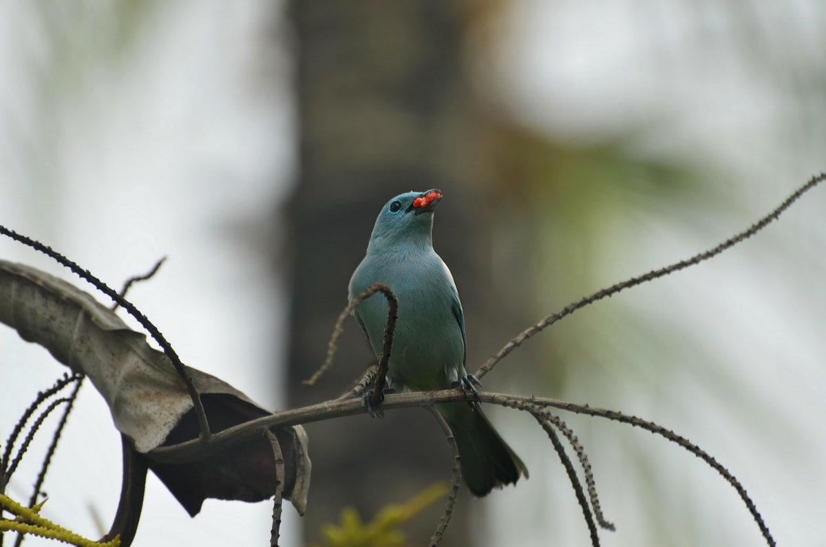 Птицы Перу - Svetlana Plasentsiia