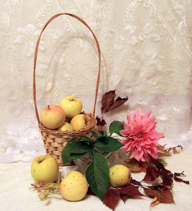 Осенние яблоки. - Инна Щелокова